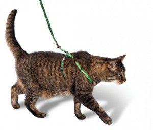 Каишка за Котки
