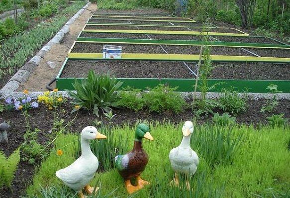 Îmbunătățirea fertilității solului și îmbunătățiri funciare