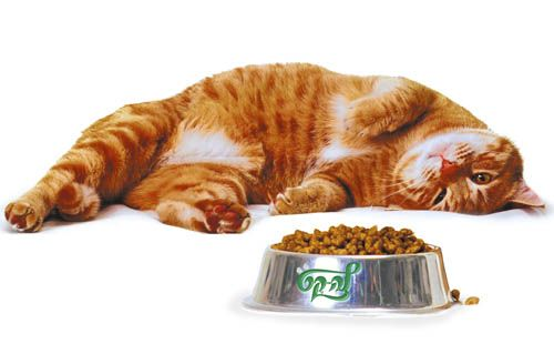 Dry mačja hrana