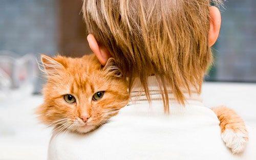 Uvjeti brige za mačke
