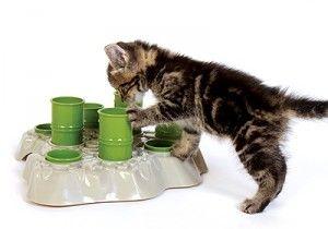 Правилното хранене котки
