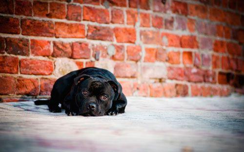 Uzroci i psa da pomogne u grčevite napade