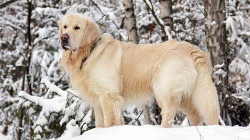Razlozi za rasterećenje i brigu o psa kaput