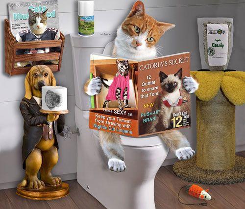 Cauzele si tratamentul constipației la pisici