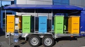 Achiziționarea și transportul de albine