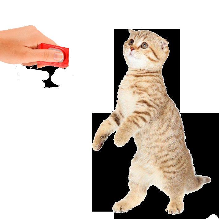 Привикнат на котката да профилни