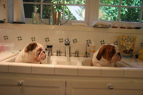 Navyknúť šteňa na čistotu