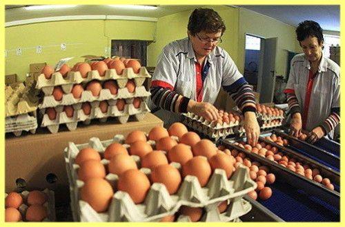 Predaj vajec ako obchodné