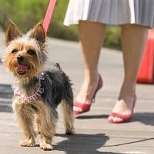 Prechádzky so psom - ako robiť zaujímavé