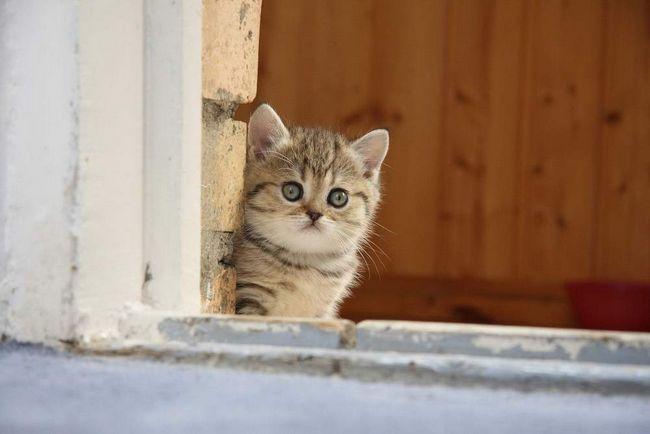 Psychológia mačiatko. Učíme sa chápať svoje túžby