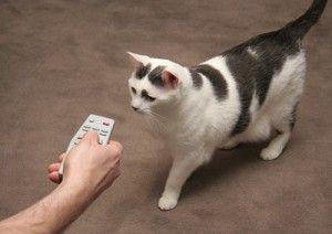 Daljinski upravljač za mačke
