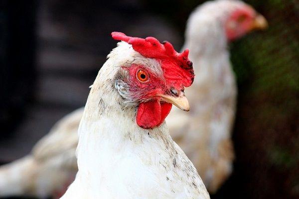 Пушкин пиле главата