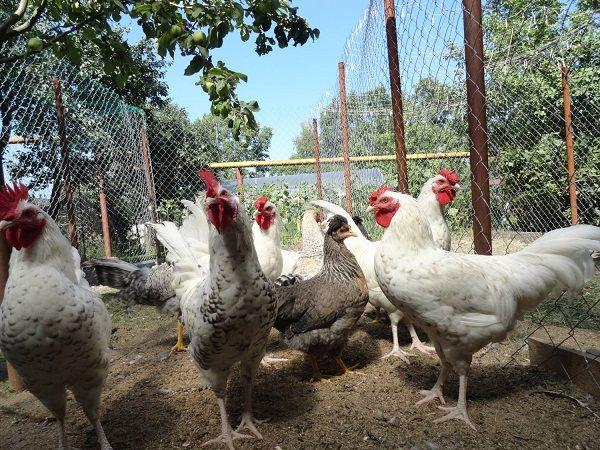 Открит камерата за пилета