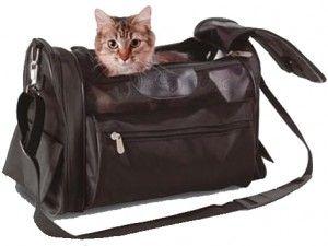 Пътуването с котка