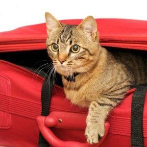 С котката по време на пътуване