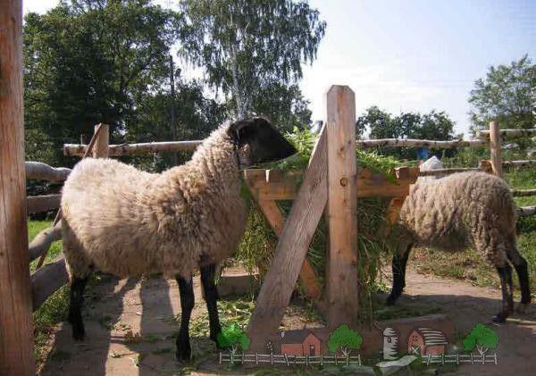 Oile în apropierea alimentatoarele pepinieră cu iarbă