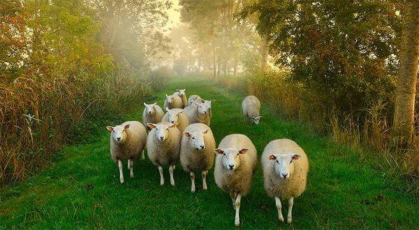 O turma de oi pe roaming