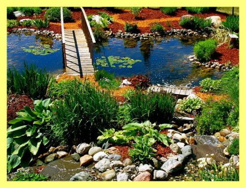 Plants Pond vikendica fotografija