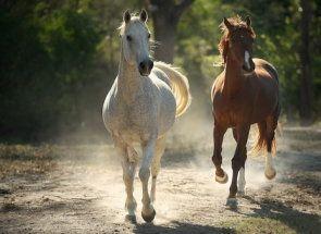 Raznolikost boja konja: demontirati odijelo