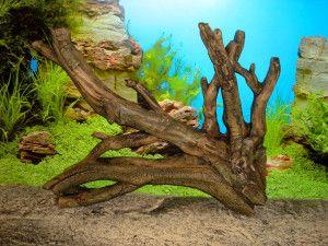 Sorte drva, pogodan za akvarij