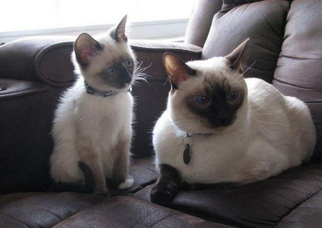 pisica mama cu copilul