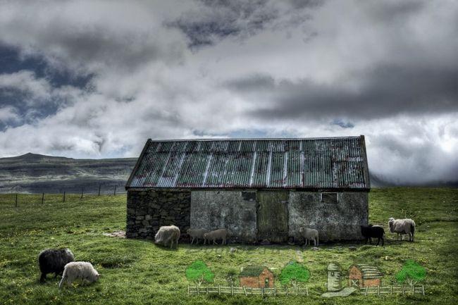 Alpine oi mânca iarbă