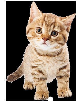 Razvoj mačića