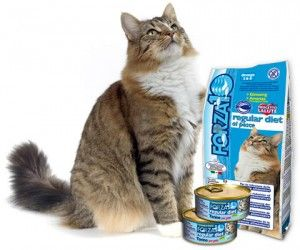 Реклама на храни за котки