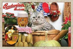 Ресторант с британските котки