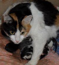 Ражданията котка: признаци на началото и на процеса на раждане