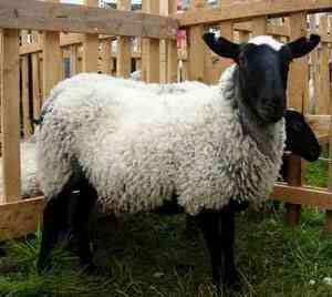 Romanov oi, export, consultanță ...
