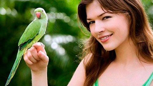 Ručné práce papagáj: ako to dosiahnuť?