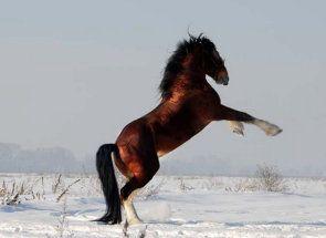 Eroi ruși sau cal, grele