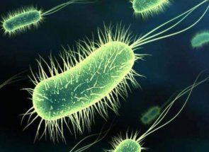 Salmoneloza - un teribil și grele pui rău