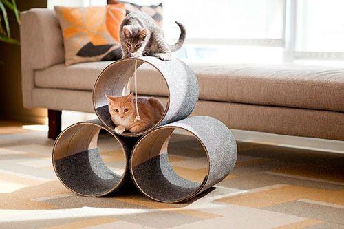 Domaći mačići: racionalno rješenje akutnih problema