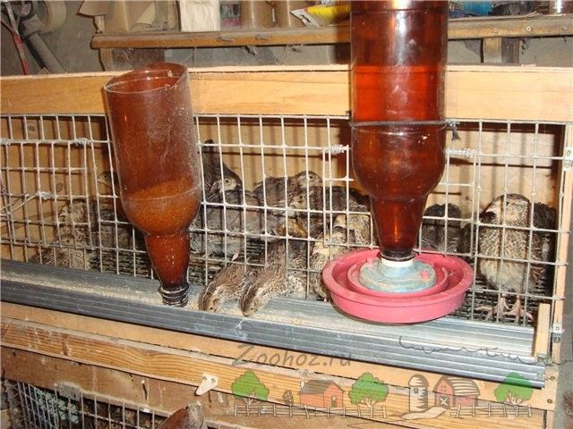 Príklad domáci waterers a podávača fliaš