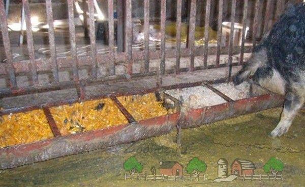 Design-ul pentru hrănirea porcilor dintr-o butelie de gaz