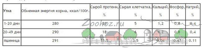Desenul casei 20 de pui