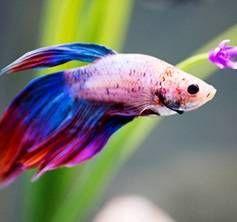 Najljepši akvarij riba