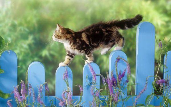Тайната на баланс на котката