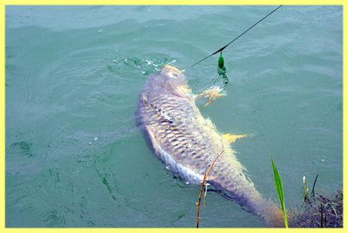 Тайните на улов на шаран през август