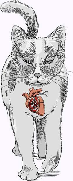 Дирофиларии при котките.