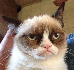 Pisică furios