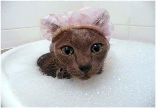 Сух шампоан за котки