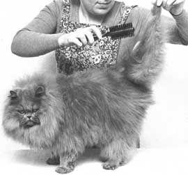češljanje mačke