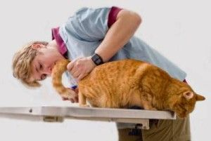 Котешки заболявания на долните пикочни пътища