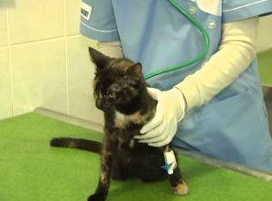 Методи за лечение на уролитиаза при котки