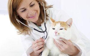 ветеринарен лекар в котешки заболявания на долните пикочни пътища