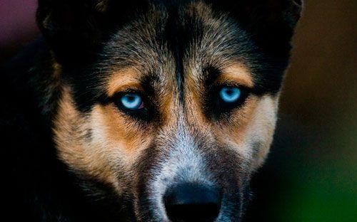 Simptomi, liječenje i prevenciju od štenećaka pasa