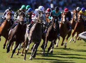 Curse de cai - un test pentru cal sau nervii biciclistului?